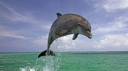 Dolphin View